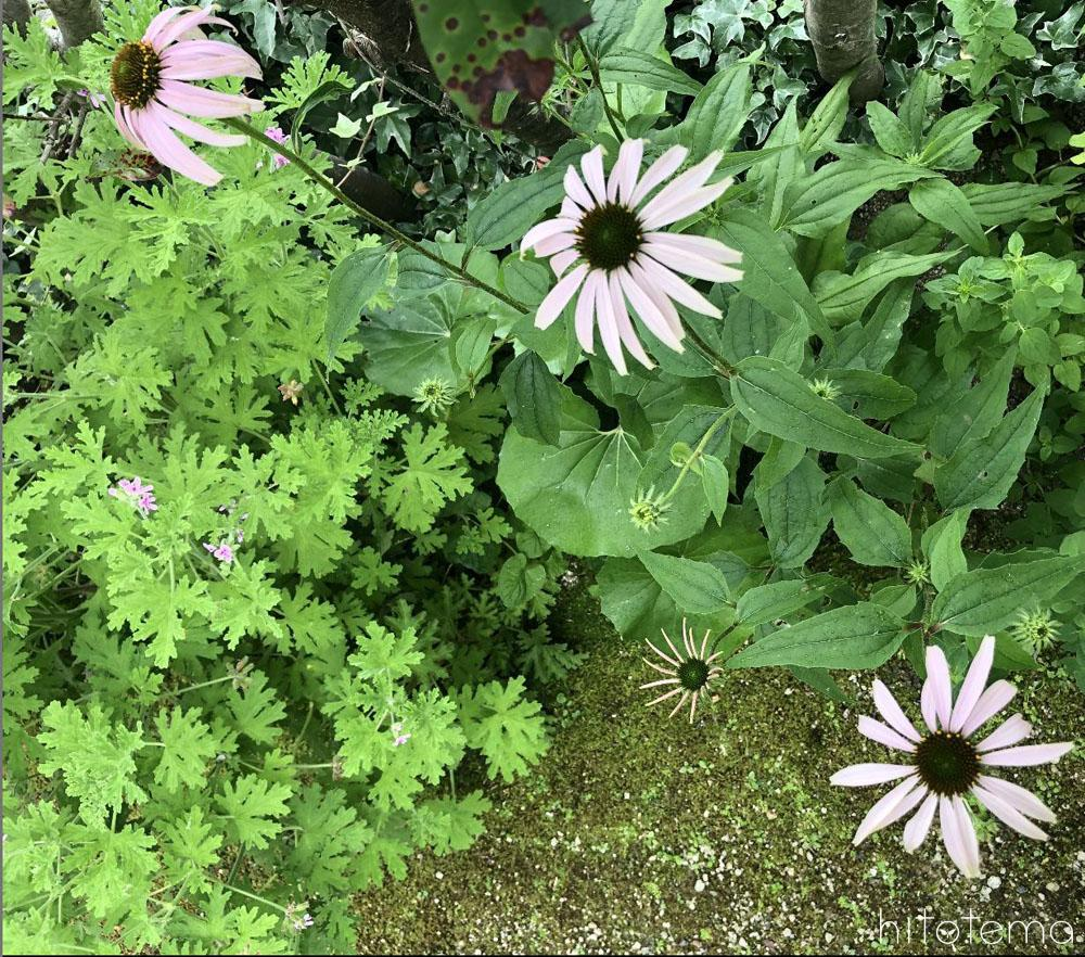 古くから植物は人の健康や癒しとして生活に使われていた