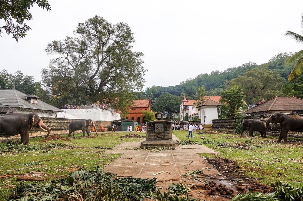 古都キャンディ・仏歯寺の象