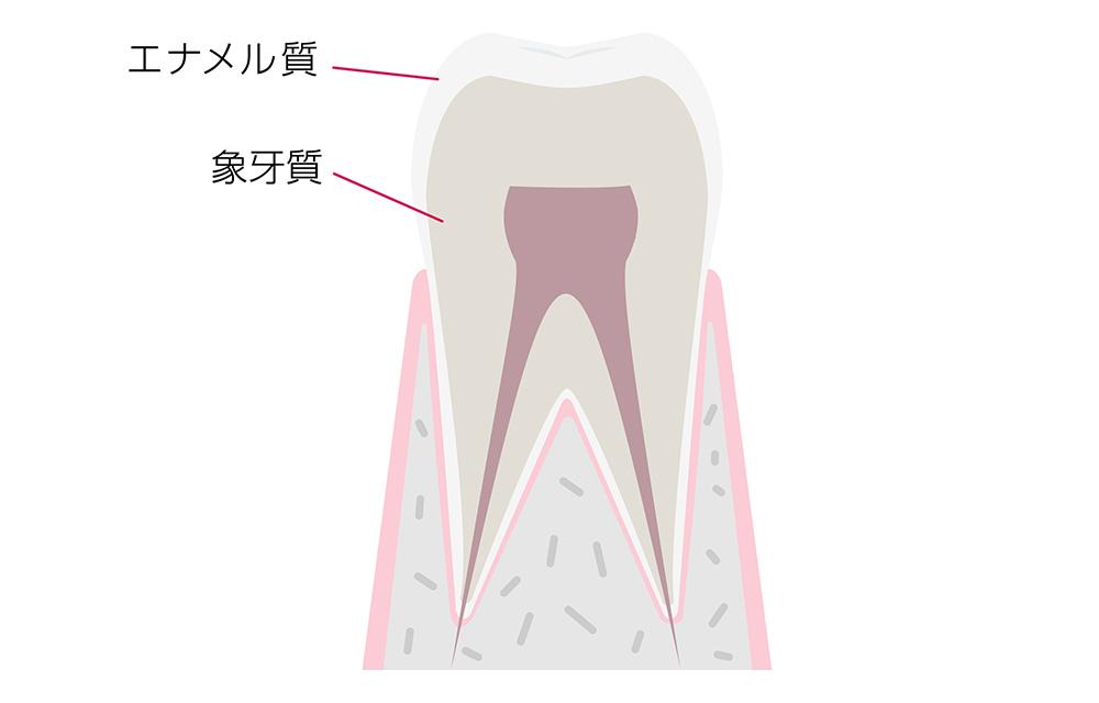 歯は何でできている?