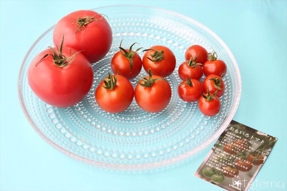 おもいろトマト大中小