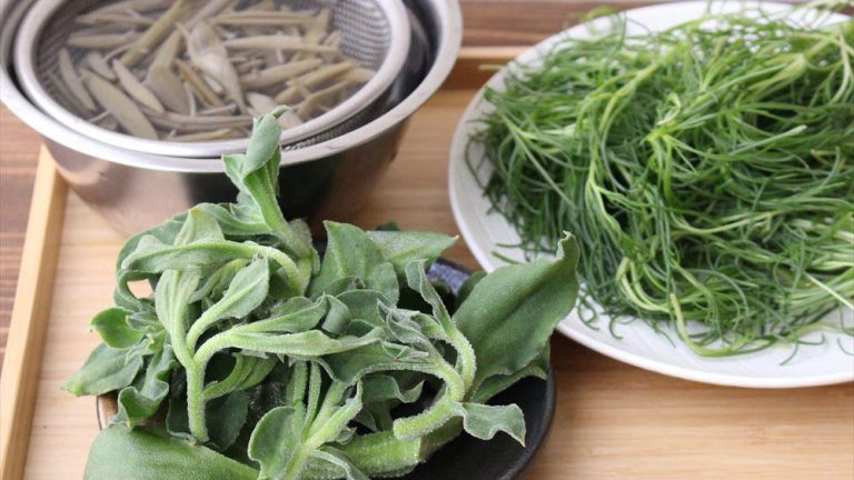ちょっと変わった葉物野菜【おかひじき・じゅんさい・アイスプラント】を食べてみよう!