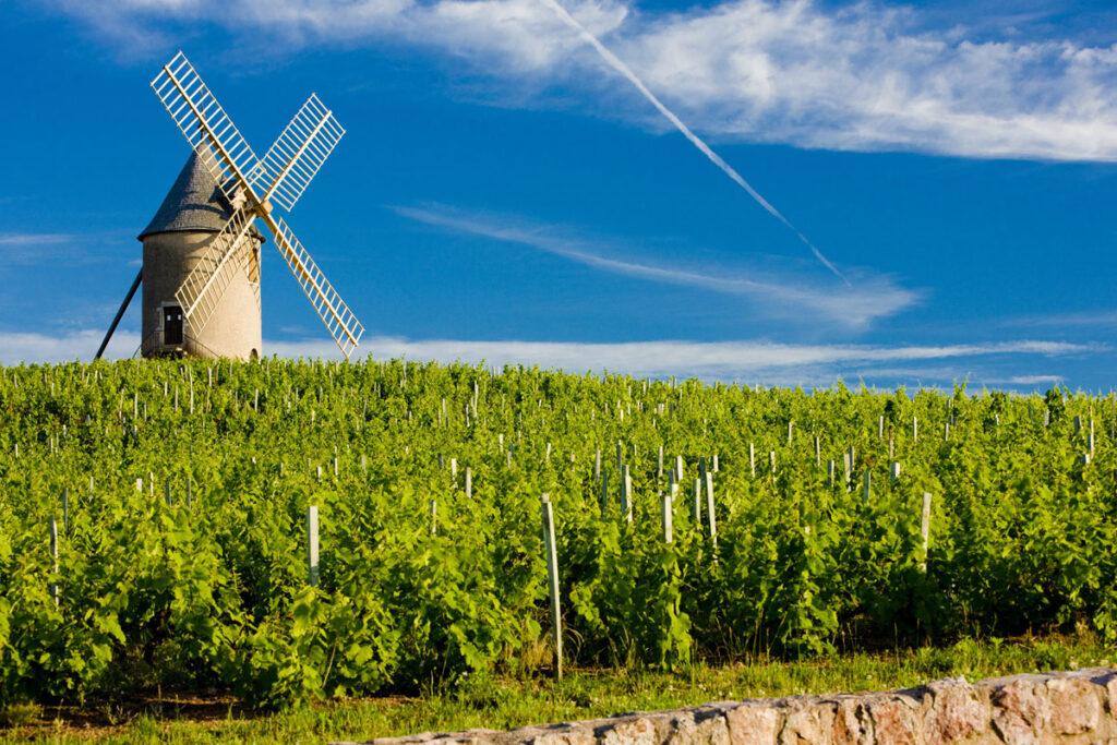 ボジョレー地区の葡萄畑