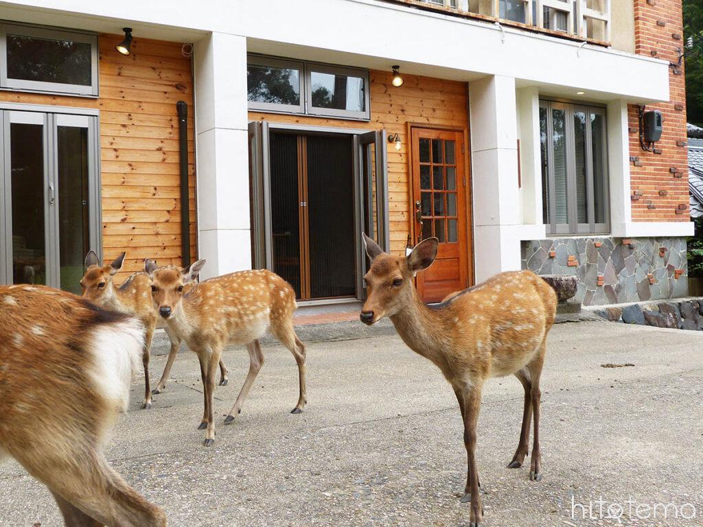 鹿がやってくるディアパークイン