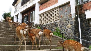 鹿が遊びに来る!?奈良公園の中に泊まれる「ザ・ディアパークイン」