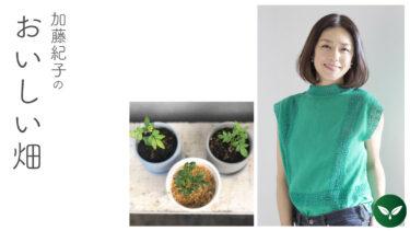 今年始めた、ワクワクするあれこれのお話 #加藤紀子のおいしい畑