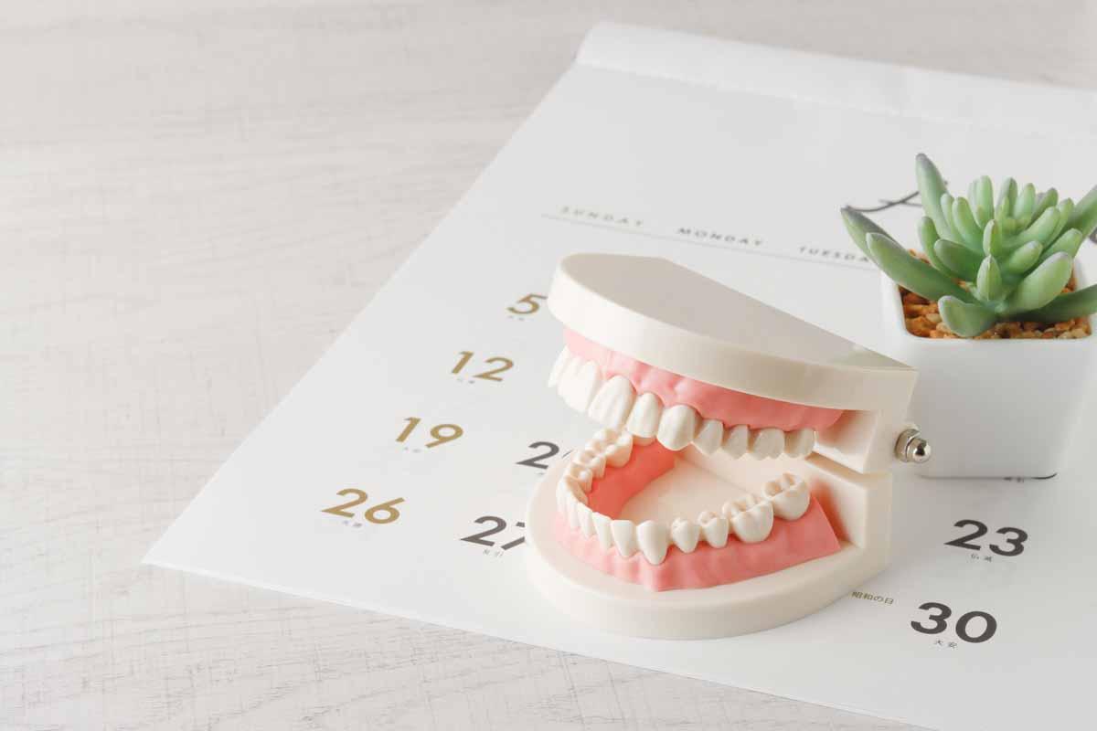 カレンダーと歯型模型