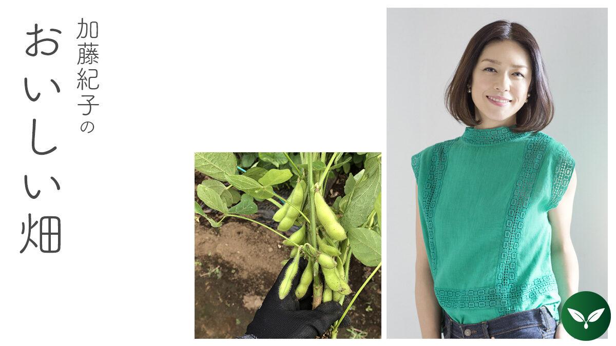 パチン、パチンは夏の音。思わず喉が鳴る枝豆の話。 #加藤紀子のおいしい畑